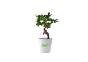 plante verte végétale dans on pot céramique personnalisé