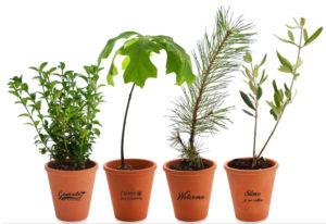 plantes en pot de terre cuite personnalisés